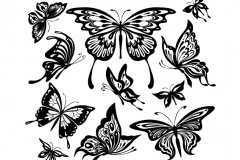black-white-butterfly