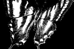 butterfly-1241689_960_720
