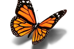 butterfly_tattoos_design_009