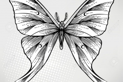 butterfly_tattoos_design_074
