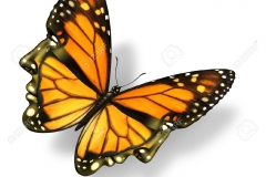 butterfly_tattoos_design_075
