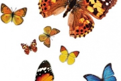 cool-butterfly-tattoo-designs