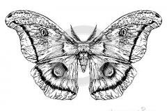 croquis-raliste-dtaill-d-un-papillon-de-mite-51709593