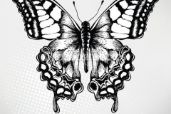 depositphotos_6981334-Butterfly-hand-drawing-vector