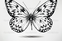 depositphotos_7317243-Butterfly-hand-drawing.-vector